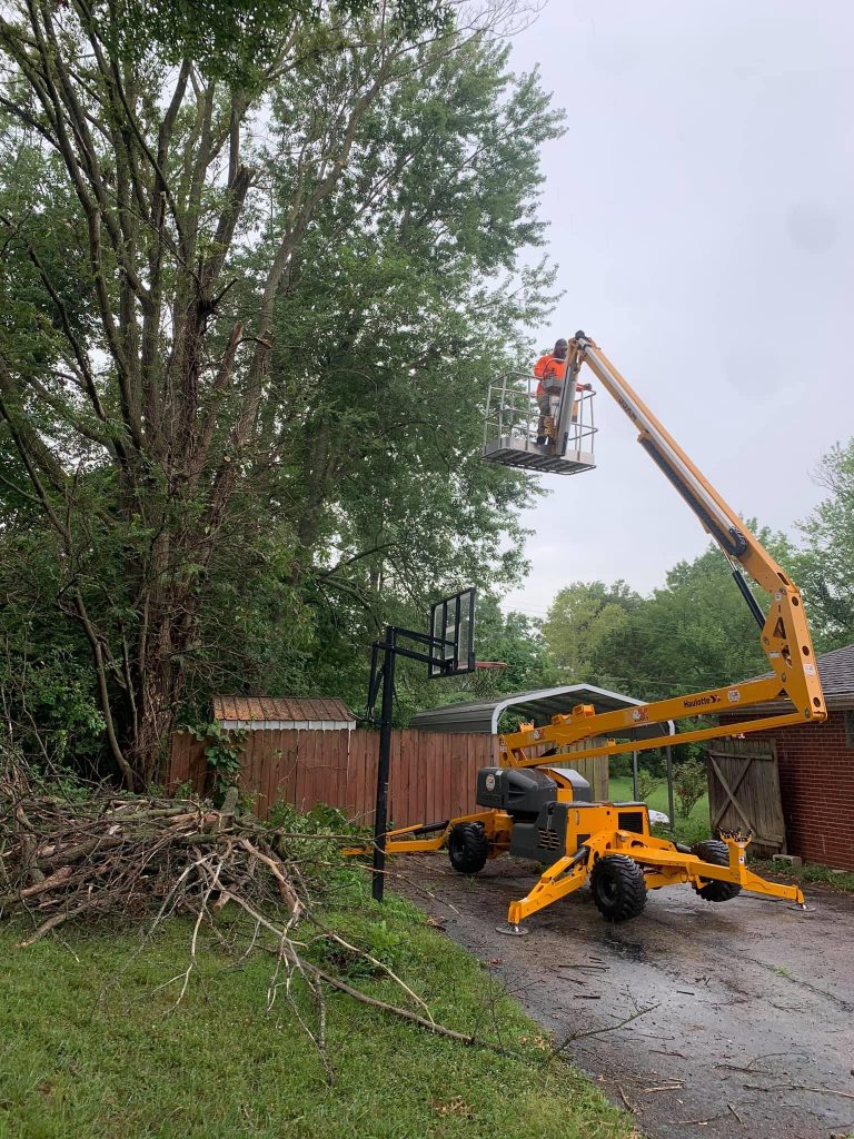 Large Tree Removal Services in St. Louis