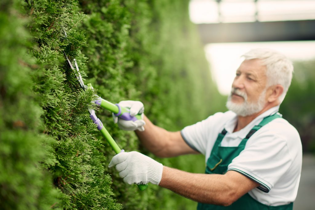 Tree pruning Mid America Tree Experts