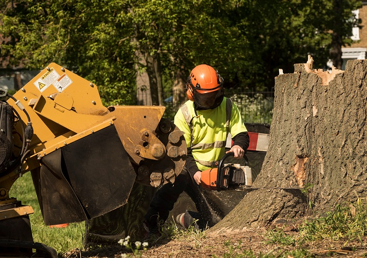 Stump Removal Garden Care Mid America Tree Experts