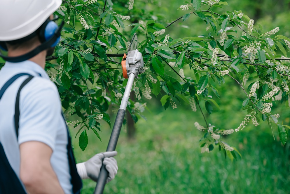 Professional Tree Services Missouri